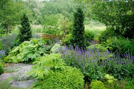 outdoor privacy fence trees fence ideas privacy fence trees ideas