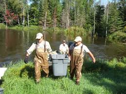 slip minnesota dnr allowed fish virus u2013 twin