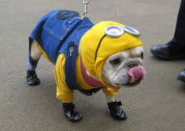 Dog Costumes Halloween Minions Dog Costume Halloween Minion Despicable Follow Project