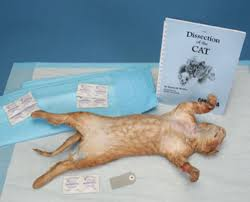 100 cat dissection lab manual student dissection kit