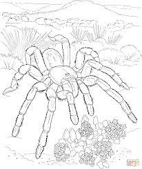 tarantula coloring page wallpaper download cucumberpress com