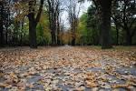 File:Spomenik prirode Park Blandaš u Kikindi 05.JPG - Wikimedia ... - Downloadable
