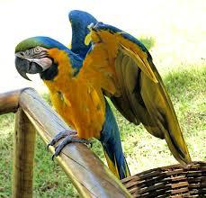 Train Talk Bird Images?q=tbn:ANd9GcQHuXzvrBZvQCMJYF5M6BoQH7HudjXQOARMoN25wqhqq2_FDLT27Q