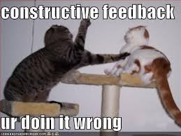 two cats fighting, captions says constructive feedback ur doin it wrong