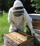 UMT PrADE : Protection des abeilles dans l