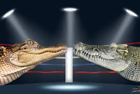 what u0027s the difference between an alligator and a crocodile