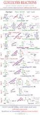 glycolysis reaction steps mcat cheat sheet study guide leah4sci