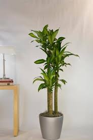 our diverse plant selection greencare interior plants houston tx