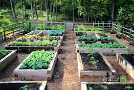 How To Keep Deer Out Of Vegetable Garden by Three Key Benefits Of Gardening In Raised Beds Growing A Greener