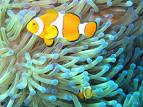ryby morskie akwariowe