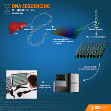 dna sequencing fact sheet national human genome research