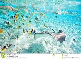 bora bora underwater royalty free stock photography image 27627817