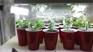 fresh modern indoor herb garden aquarium 8405