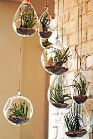 creative indoor plants decors for christmas new year home decor