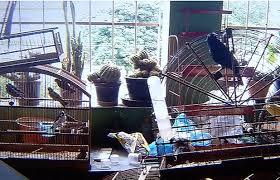 Aves em cativeiro são resgatadas em Cariacica ( ES)