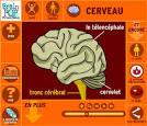 Le système nerveux et ses perturbations | Vive les SVT !, les ...