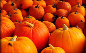 halloween pumpkin wallpapers fall pumpkins wallpapers gallery image mrfab