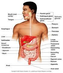 BSc  Hons  Biomedical Sciences  Human Biology  Course   Leeds Beckett University