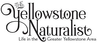 YNP Trip Report   Oct      Pt     Yellowstone Naturalist Yellowstone Naturalist