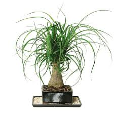 pet safe houseplants the home depot community