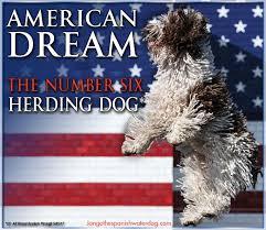 belgian sheepdog national specialty 2018 marion ohio kennel club u2013 sunday july 30 2017 canine chronicle