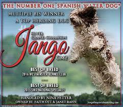 belgian sheepdog national specialty 2018 peninsula dog fanciers club u2013 saturday march 25 2017 canine
