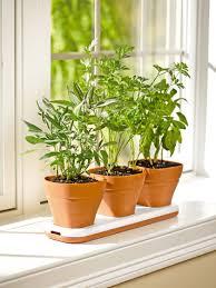 herb pots windowsill herb garden planter gardeners com