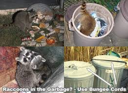 How Do You Get Rid Of Possums In The Backyard by Raccoon Prevention How To Keep Raccoons Away And Out Of Your