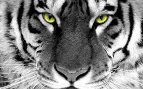 Imagenes sorprendentes de animales en buena definición !!!
