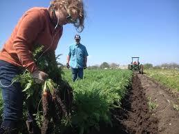 Farm To Table San Antonio by City Council Makes Urban Farming Legal Throughout City