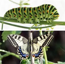 De la chenille au papillon dans PAPILLON