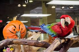 spirit halloween corporate liberty science center the animals at lsc are getting into the