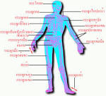 การจัดระบบในร่างกาย | maulchon