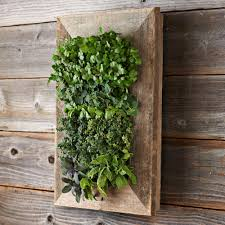 Outdoor Wall Planters by Reclaimed Barn Door Vertical Wall Planter The Green Head