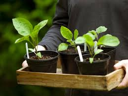 how to grow vegetable seeds indoors hgtv