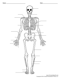 Human Anatomy And Physiology Marieb 9th Edition Quizzes Just Another Anatomy And Physiology Site Anatomy And Physiology