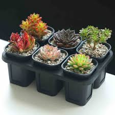 popular 6 planter buy cheap 6 planter lots from china 6 planter