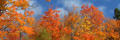 autumn winds accelerate falling leaves updraft minnesota