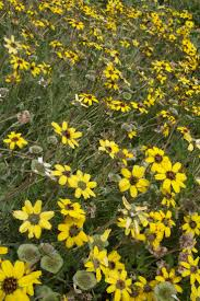 Flowers Plants by 68 Best Plants That Grow In Sw Colorado Images On Pinterest