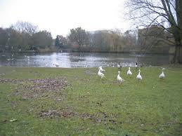 Tudor Grange Park