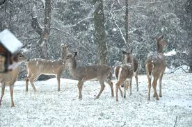 overgrazing by deer is changing the face of u s forests earth