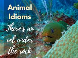grammar international animal idioms quick and dirty tips