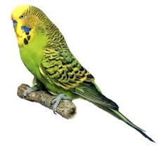 Pet shop ,,Zoo Amazona'' Images?q=tbn:ANd9GcQ_bez8kiS6Y0q_b0Dy_kMB319H6eILaXdG1pwsOxtDtgFN1G0o
