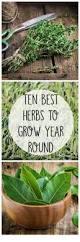 best 25 best herbs to grow ideas on pinterest indoor herbs