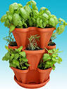 Indoor Herb Garden Kits - Grow Culinary, Medicinal & Herbal Tea Herbs