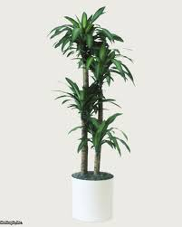 plant lights how to choose the best indoor lighting for plants