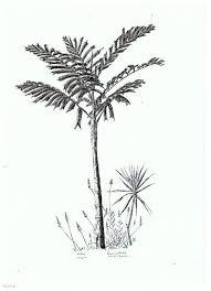 dessins palmiers association d u0027artistes