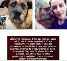 Tutora procura cachorro desaparecido próximo à Estação Carrão ...