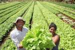 Agricultura sustentable | Energía naRural