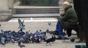 Pigeons Images?q=tbn:ANd9GcQbs7u_P3wwsjtk-a35tQ7_IGyeCeUB9UltwZglzG81LUtZVxHV